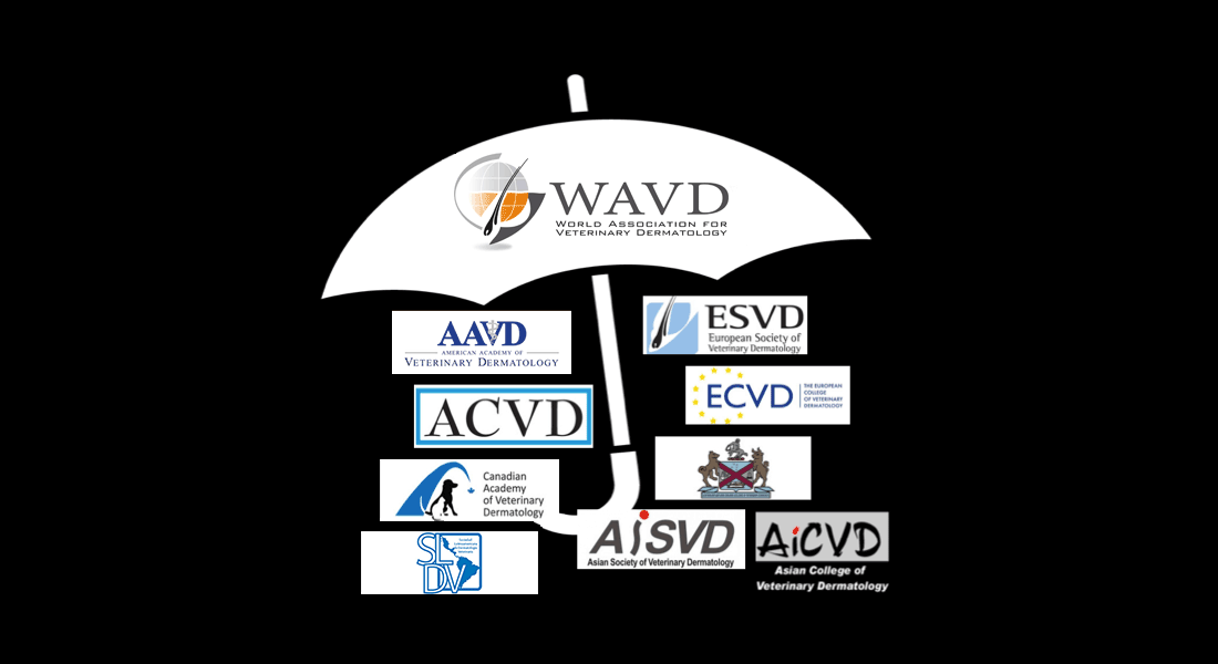 WAVD Umbrella of Organisations